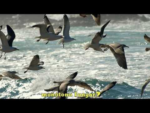 Himno de Galicia Subtitulado