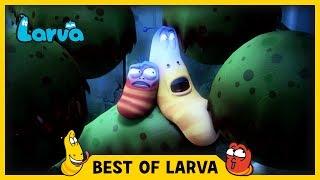 LARVA | BEST OF LARVA | Funny Cartoons for Kids | Cartoons For Children | LARVA 2017 WEEK 24