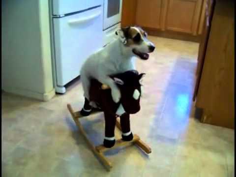 Este perro hace de todo simplemente Genial OcioFX