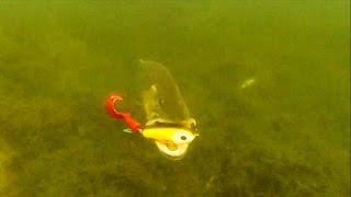 Pike attack Wolf Tail under water. Fish camera. Рыбалка щука атака Lure f muskie zander bass catfish