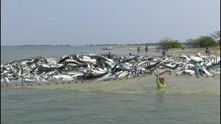 NET FISHING/VILLAGE FISHING