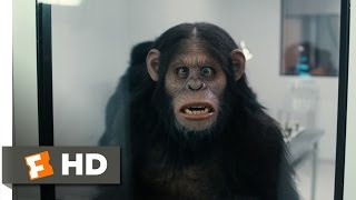 Scary Movie 5 (2013) - Rise of the Apes Scene (6/9) | Movieclips