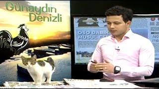 Kitten Interrupts TV Broadcast