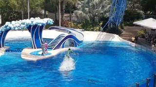 Dolphin Hydro in Blue Horizons July 2016 SeaWorld Orlando!