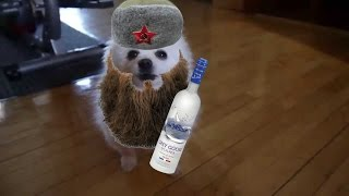Russian Borks