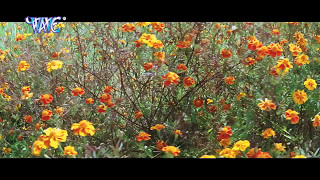 Pyar mohabaat zindabaad ,(song video full HD)