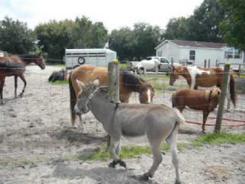 Xxx Mp4 Horses Meeting The Donkey 3gp Sex