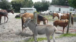 Horses meeting the Donkey