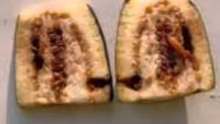 Management of brinjal Shoot and Fruit borer using biocontrol means