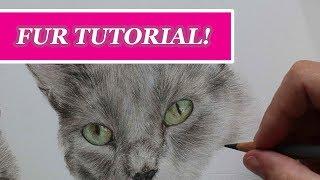 TUTORIAL | CAT FUR IN COLOURED PENCIL