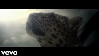 Chasing Shadows - Shakira (Music Video)