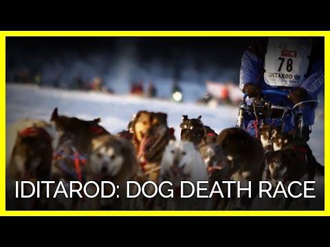 Xxx Mp4 WATCH Dog Death Race Is Being Sponsored By Jack Daniel S 3gp Sex