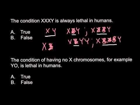 Xxx Mp4 Possible Or Not XXY XXXY XXYY XXXXY And YO Genotypes 3gp Sex