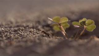 Roll  Ant Hill with Clover Free download