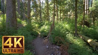 4K Virtual Hike in the Wonderful forest - Middle Fork Trail at Snoqualmie. Part 3-3 HRS Relax Music