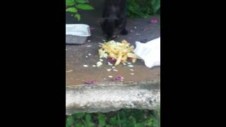 Eating out pussy