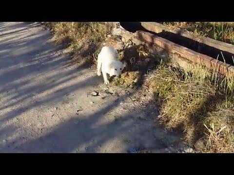 捨てられた犬が人間を見つけたときのリアクションがかわいくも切ない…