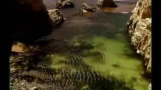 Maharaji Bhajan Ghat Hi Me Avinashi flv   YouTube 360p