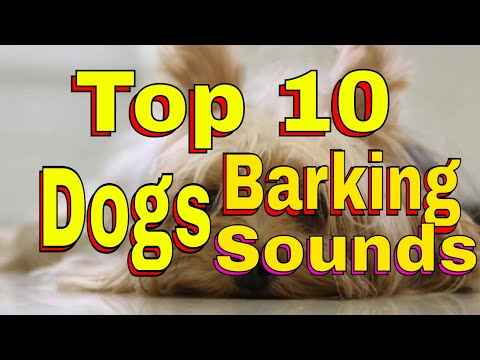 10 Popular Dog Breeds And Their Barks - HD Sound Effect Download for Commercial Use
