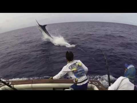 рыба запрыгивает в лодку
