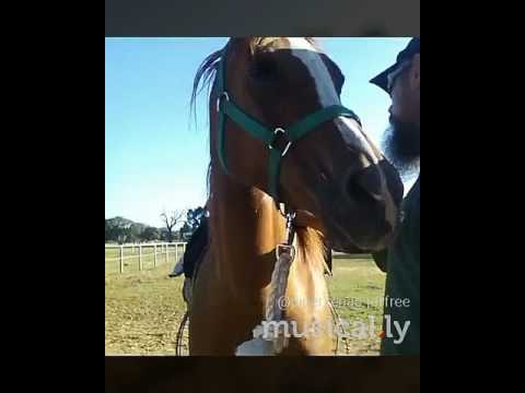 Xxx Mp4 Love My Horse And My Dad Xxx Miss Yous Lots 3gp Sex