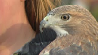Buffalo Behind The Scenes: Hawk Creek Wildlife Center