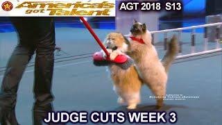 The Savitsky Cats FULL PERFORMANCE New Cats & Tricks  America's Got Talent 2018 Judge Cuts 3 AGT