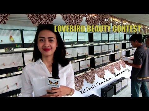 DUNIA HOBI : Lovebird Beauty Contest Di KLI Paris Van Java Bandung