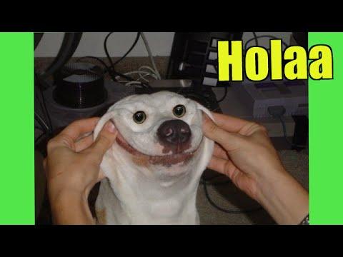 Los Mejores Videos De Perros Graciosos Y Tiernos 2015 - Videos De Risa De Perros