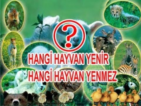 İslam'da Eti Yenen -Yenmeyen Hayvanlar