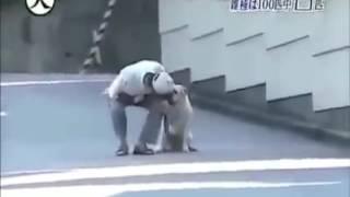 Majikan ini pura pura pingsan liat reaksi si anjing ini!!