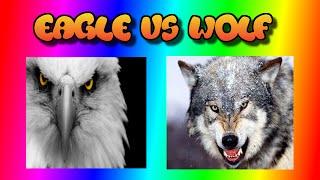 GTA V funny moments, amimal wars, wolf vs eagle