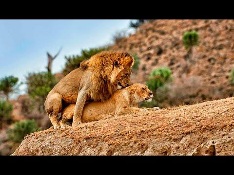 Xxx Mp4 Lion Love 3gp Sex