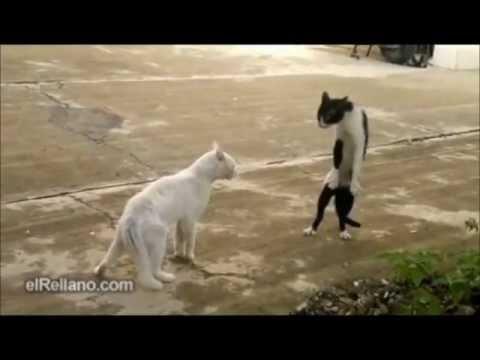 Loquendo Estupideces y peleas de gatos y perros