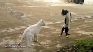 Loquendo - Estupideces y peleas de gatos y perros