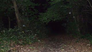 Ghosts & Spirits:  Old House Woods, Virginia