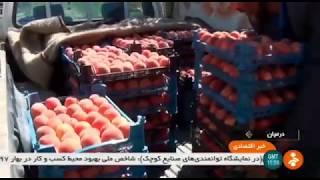 Iran Peach harvest, Darmian county برداشت هلو شهرستان درميان ايران