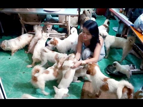 Người phụ nữ độc thân ở Sài Gòn nuôi 90 con chó Tin tức trong ngày