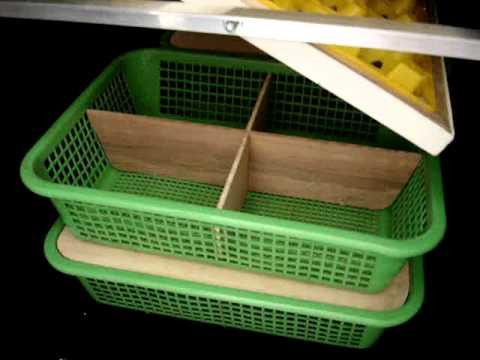 sabong incubator