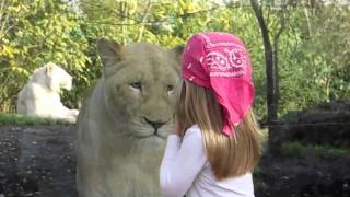 little girl facing the lion