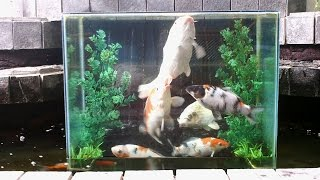 Creating an inverted aquarium for pond daikhlo for Inverted fish tank