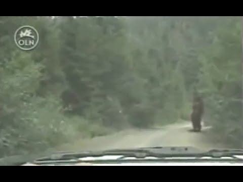 Mysterious Encounters MOUNT St. HELENS REAL BIGFOOT DOCUMENTARY