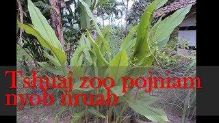 Tshuaj zoo pojniam nyob nruab hlis 25 Sep 2017