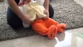 Athen 39 s Chicken Costume Cute Baby Chick