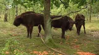 Rewilding the Heath | People & Politics