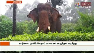 Valparai: After long 10 days Elephant atrocity came to end | Polimer News