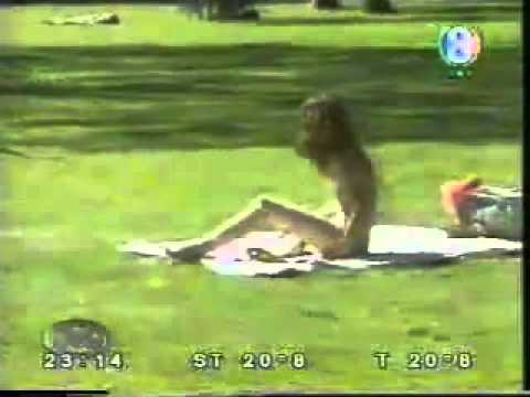 YouTube - Dog Sex With Girls Must Watch Brought To You By Mubeen Meo.flv
