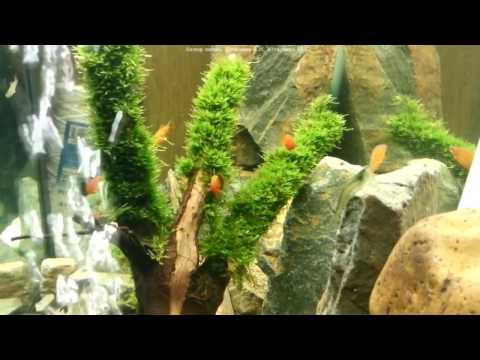 Как сделать пузыри в аквариум 71