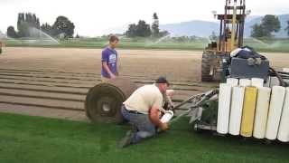 Harvesting Large Turf Rolls