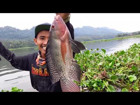 Xxx Mp4 Cara Unik Mancing Ikan Nila Lihat Hasilnya 3gp Sex